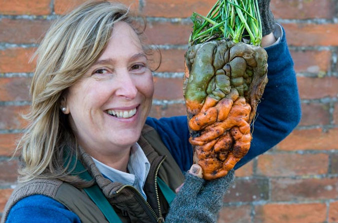 gigant carrot