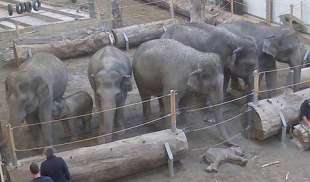 elefantebb