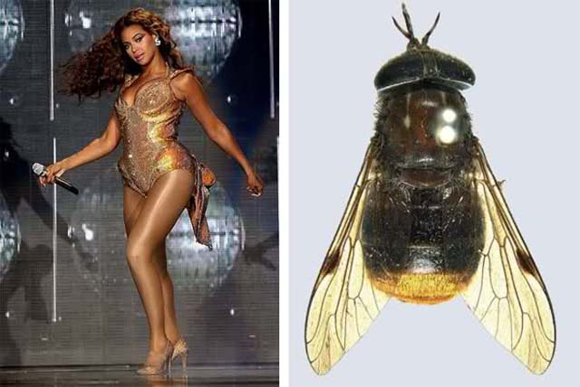 moscabeyonce
