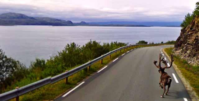 alce_carretera