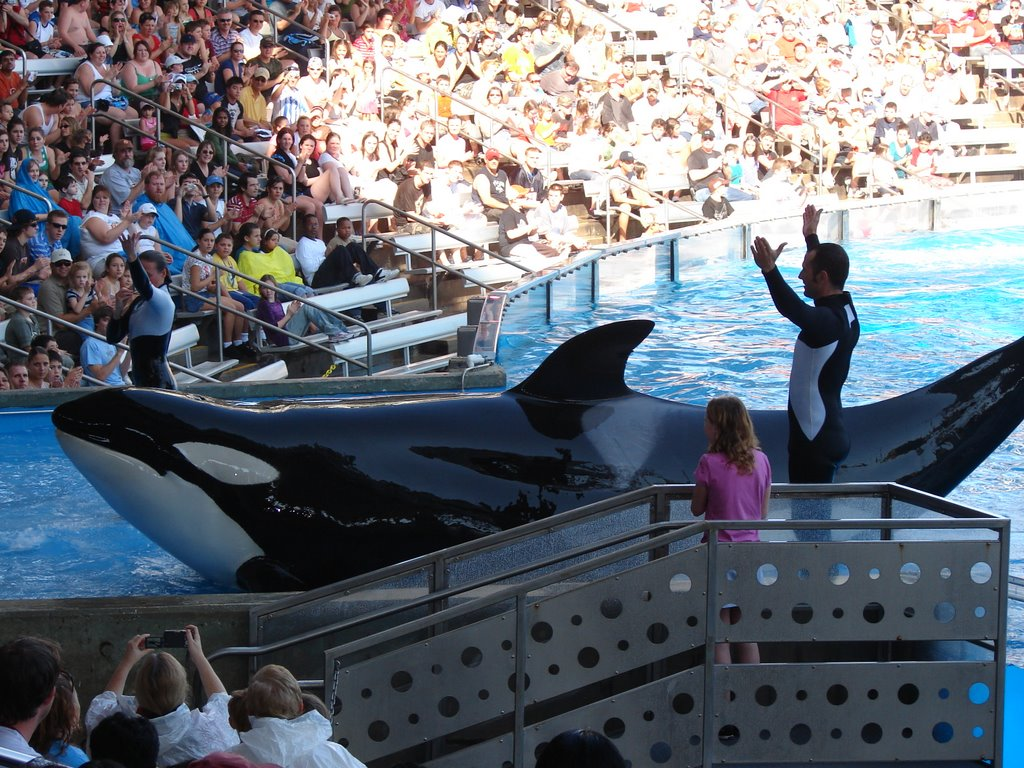 orcasw