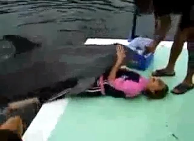 delfin_violador