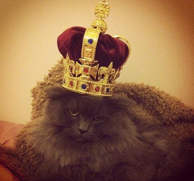 gato_rico_instagram_5