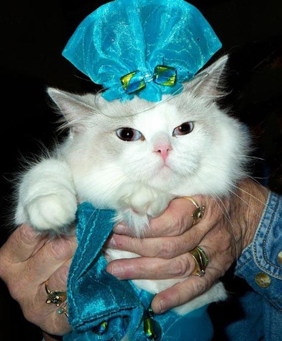 gato_elegante_