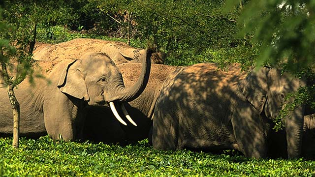 elefantes_ebrios_2