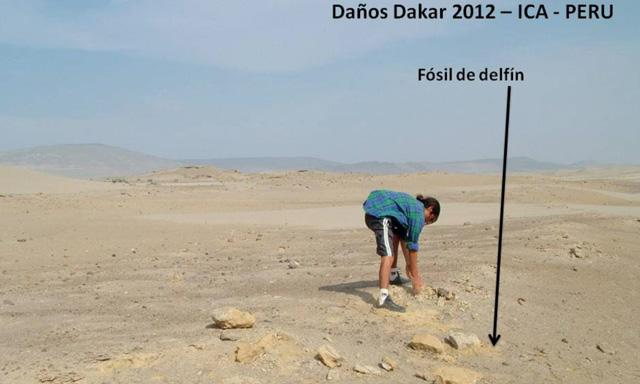 fosiles_dakar_peru_4
