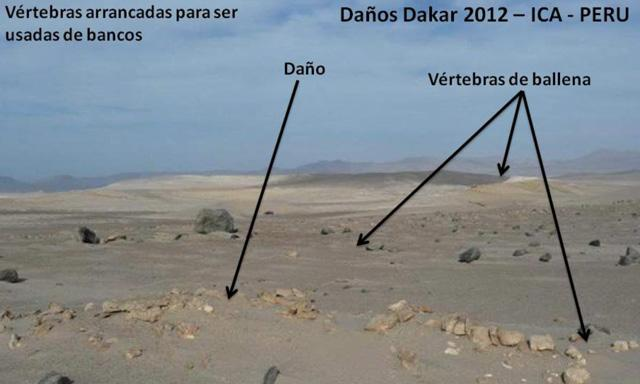 fosiles_dakar_peru_6
