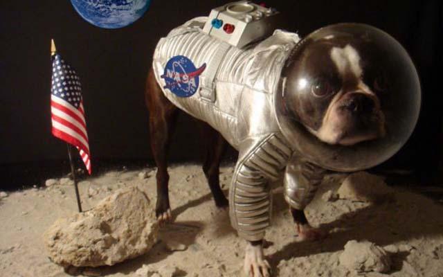 perrito_astronauta_3