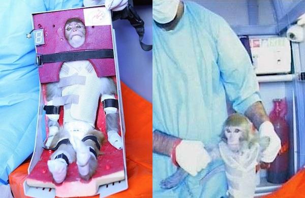 Irán lanzó un mono al espacio 02