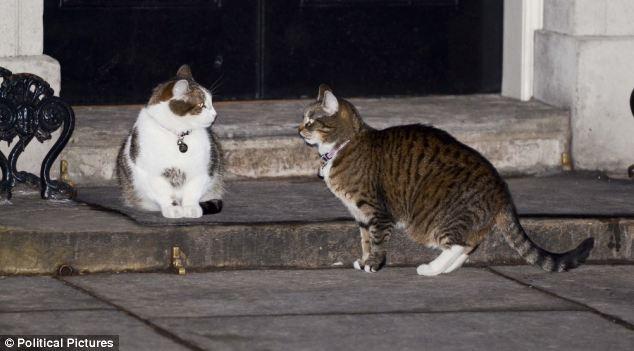 Larry se vio forzado a entablar relaciones con Freya, otra cazadora de ratones.