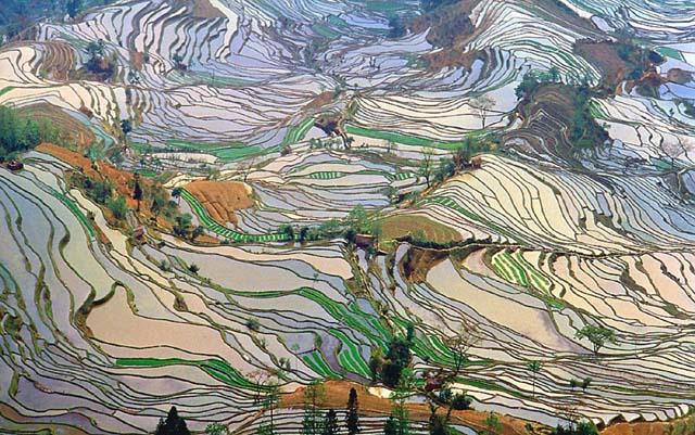 campo_arroz_chino_1