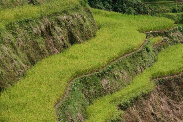 Amazing images showing the Hani Rice Terraces