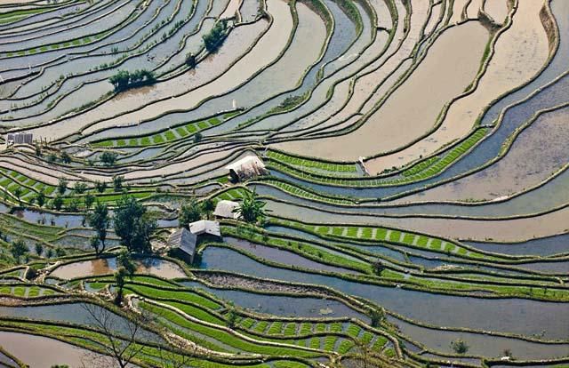 campo_arroz_chino_2