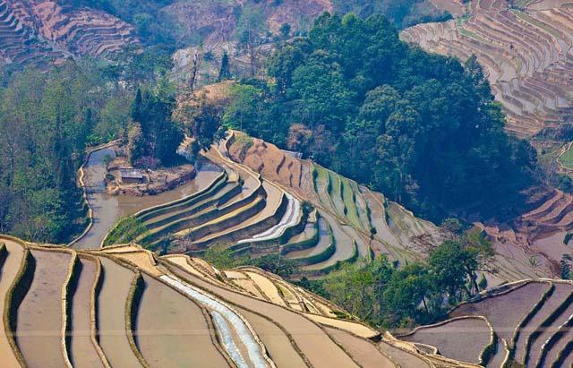 campo_arroz_chino_8