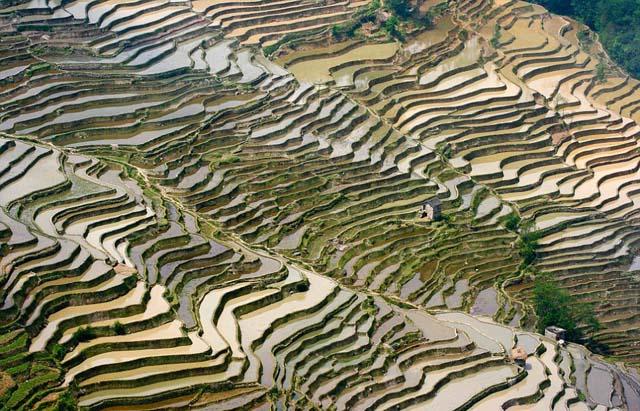 campo_arroz_chino_9