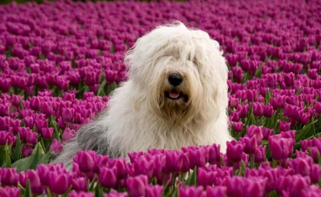 Картинки по запросу собака в природе