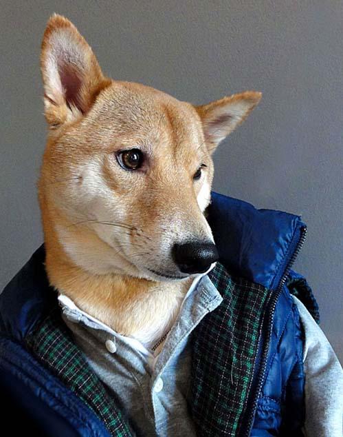 perro_mejor_vestido_1