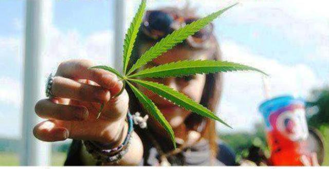 legalizar mariguana df
