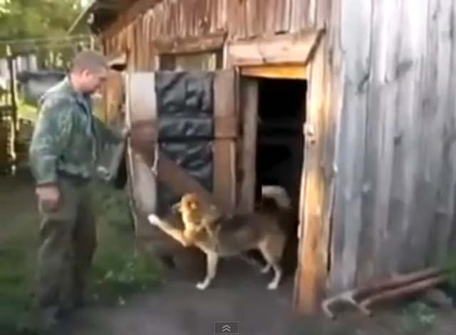 perro_no_ducha_