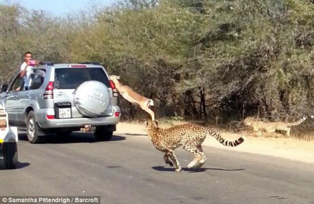 escape antilope