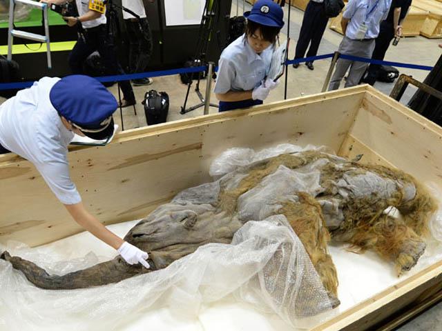 JAPAN-MAMMOTH-ANIMAL-EXHIBITION