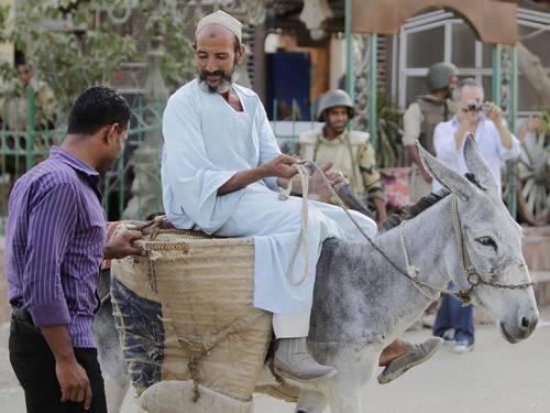 burro egipto