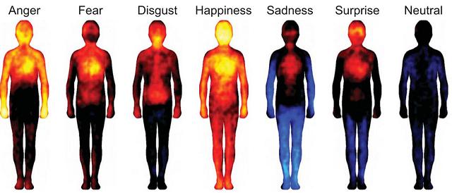 El amarillo muestra las áreas pintadas por más personas, mientras que el azul muestra las menos pintadas. En esta imagen, de izq. a der. se muestran: ira, miedo, asco, felicidad, tristeza, sorpresa y neutralidad