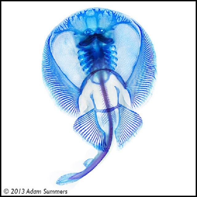 pecestransparentes07