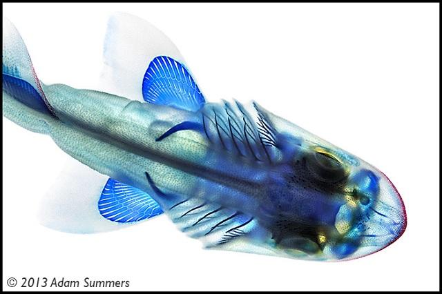 pecestransparentes10
