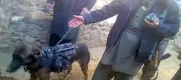 perro ejercito talibanes