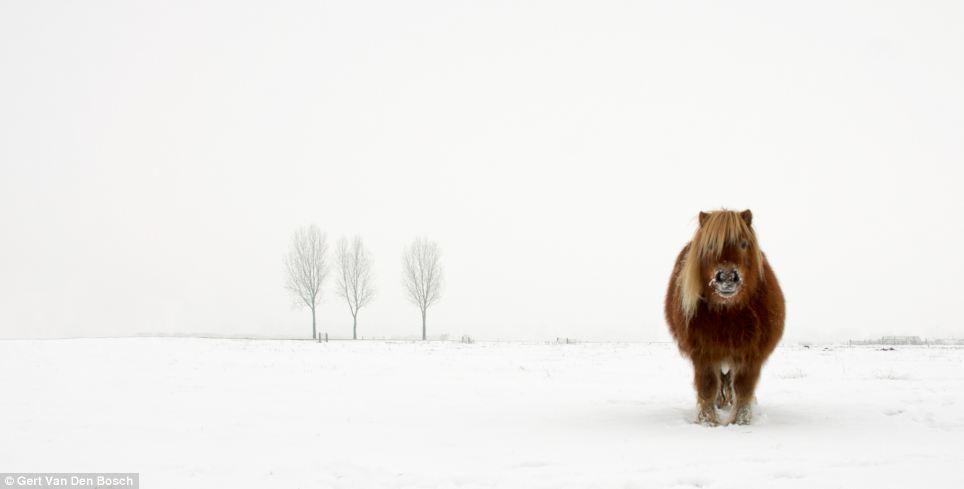 Sony World Photography Awards pony