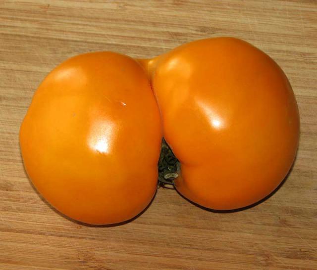 big-ass-tomato-22