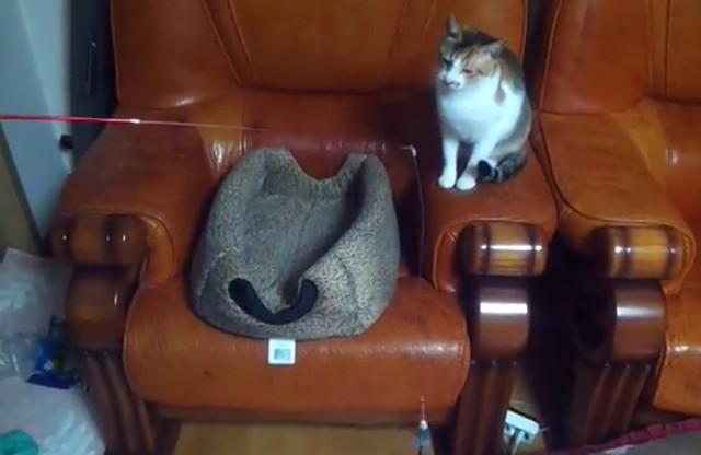 gato_pesca_gato_sin_saber_