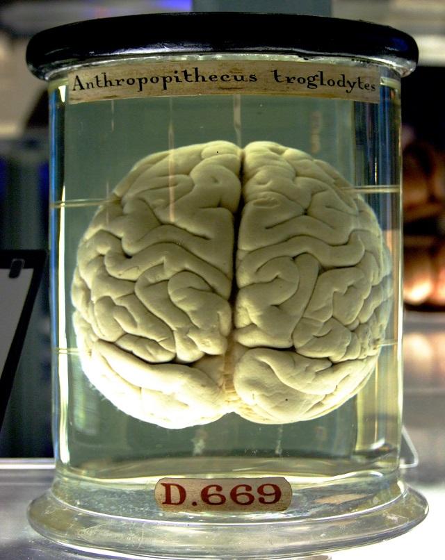 hábitos cerebro00