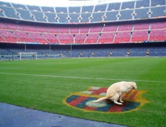 perro odia barcelona