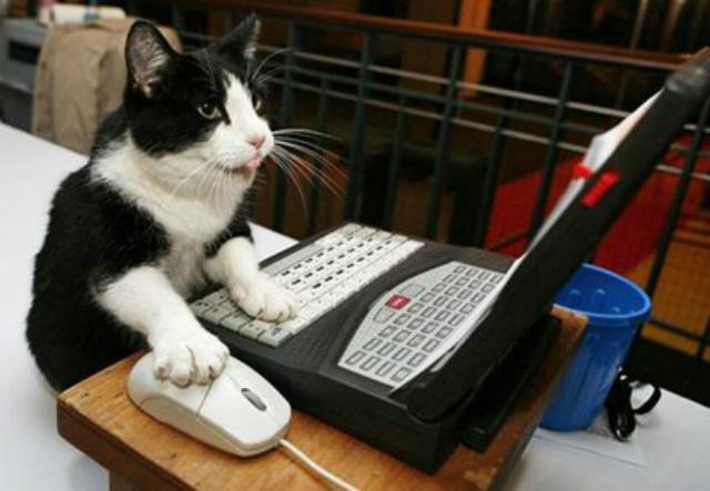 gato internet