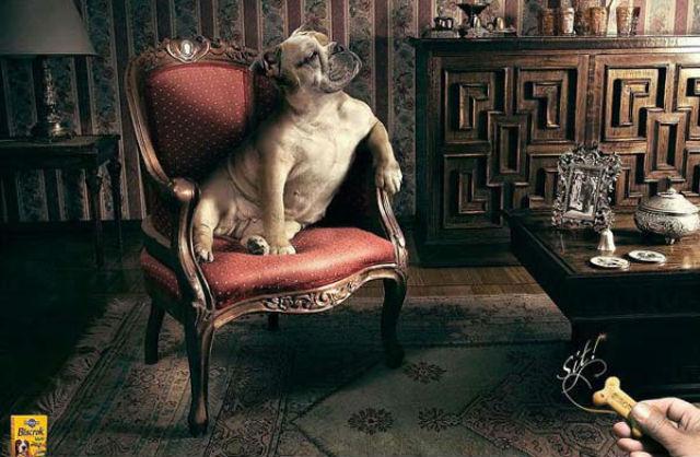 publicidad perros (11)