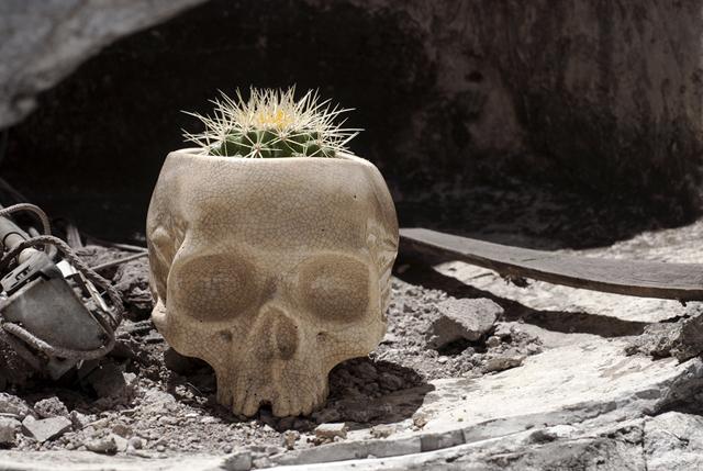 Cráneo de LODO2