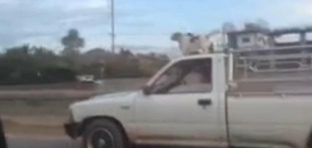 perro camioneta