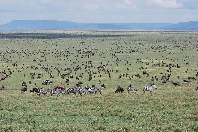 serengeti_tanza_