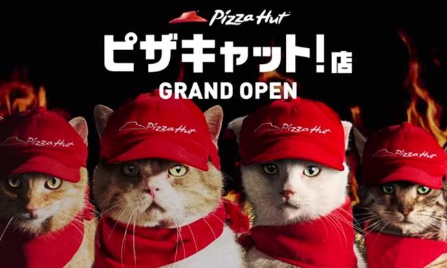 pizza gatos