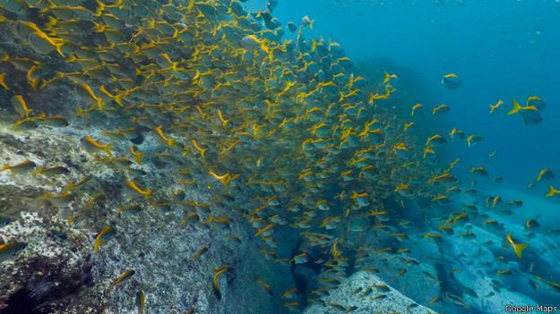 141114182844_great_coral_barrier_624x351_googlemaps