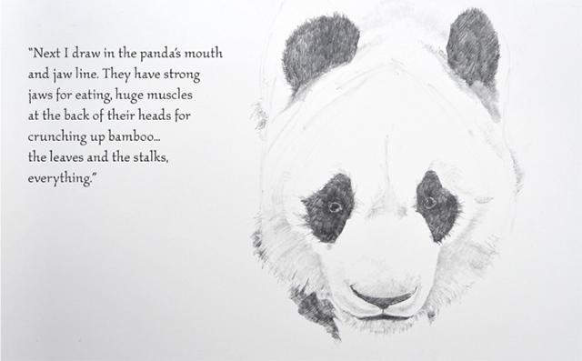 dibujar-panda08