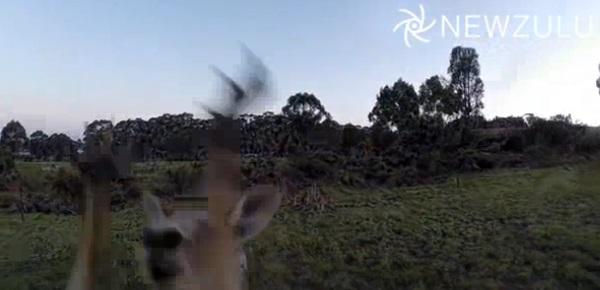 canguro drone
