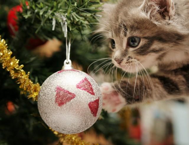 kitten_with_tree