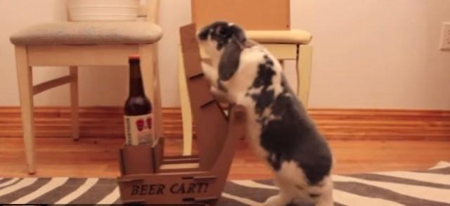 Beer-Rabbit-650x298