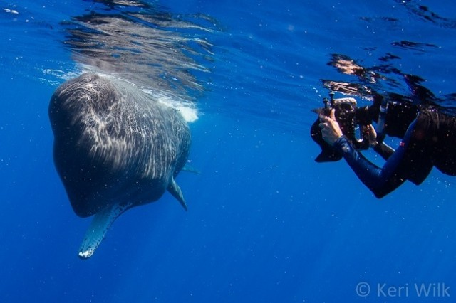 Divers-get-caught-in-a-whale's-poopnado-says-it-feels-like-swimming-in-chocolate-milk1