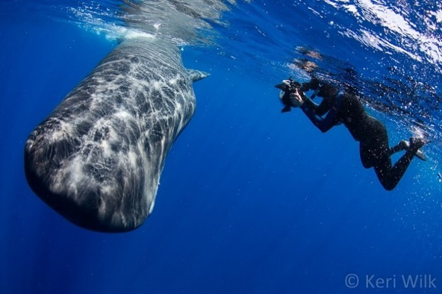 Divers-get-caught-in-a-whale's-poopnado-says-it-feels-like-swimming-in-chocolate-milk3