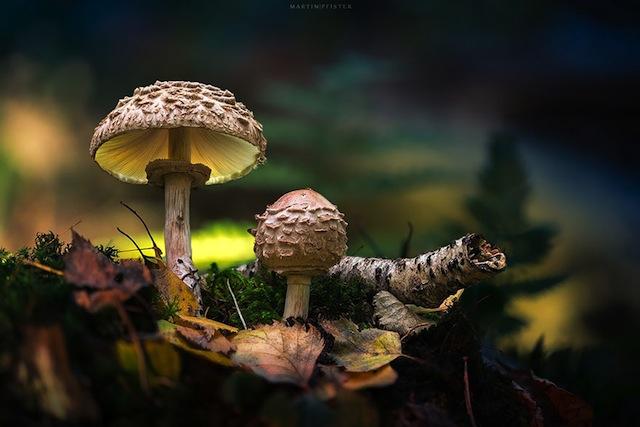 mushrooms-martin-pfister-9