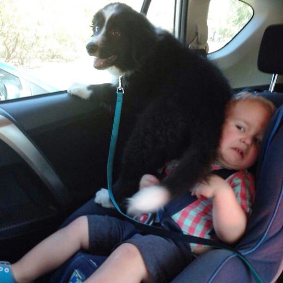 Dogs-Can-Be-Jerks-Too-8__605